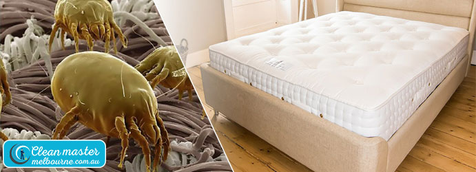 Mattress Dust Mite Removal Service